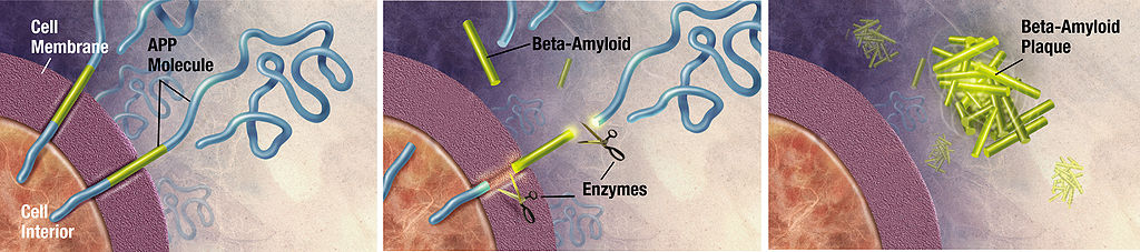 schematic of amyloid-beta formation