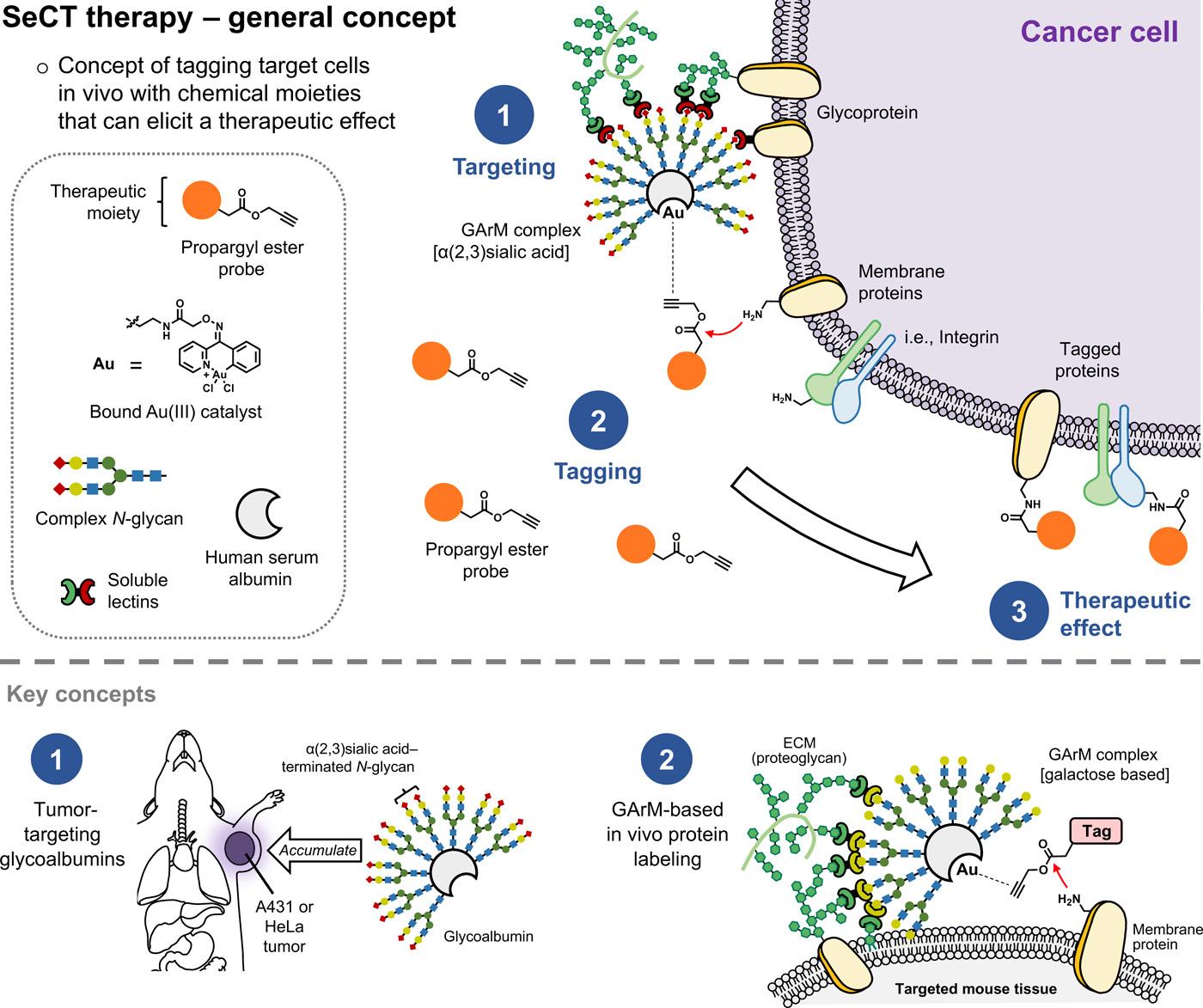 glycosylated metalloenzyme