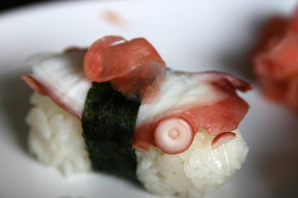photo of octopus sushi
