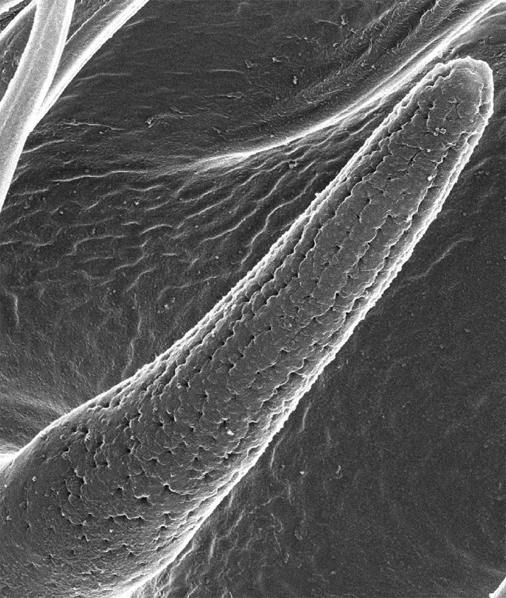 image of fly nanopores