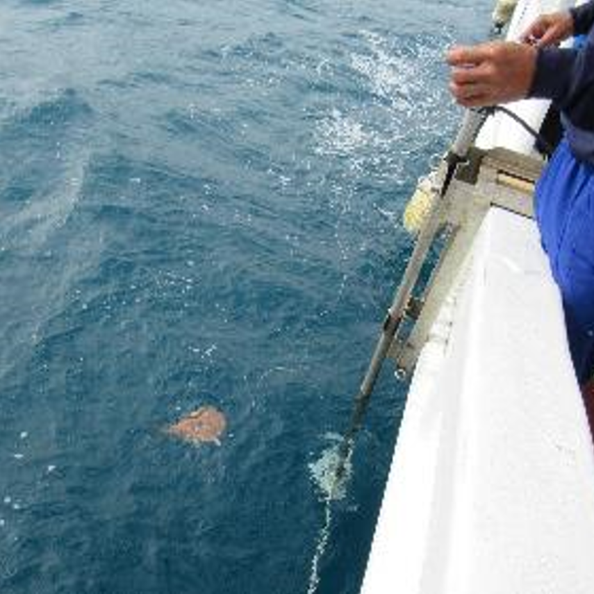 electric ray mapping ocean near boat