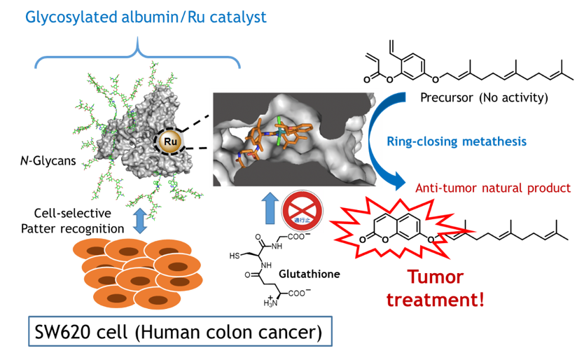 schematic for metalloenzyme targeting of cancer