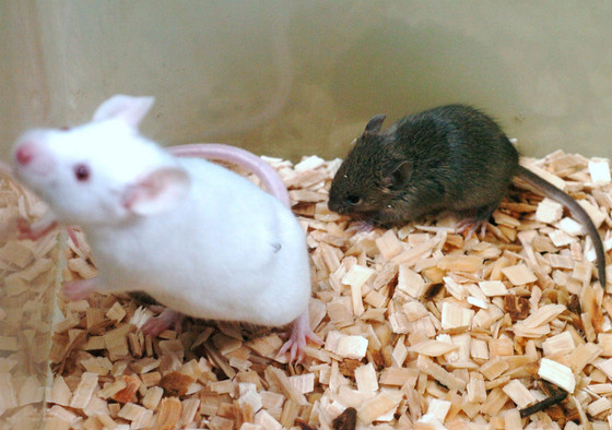 mouse cloned from frozen mouse
