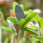 Blue gene regulation helps plants respond properly to light