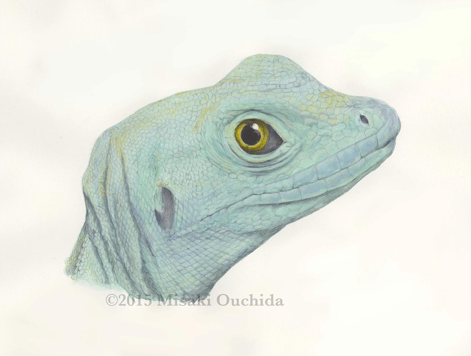 Talking science Illustration with Misaki Ouchida