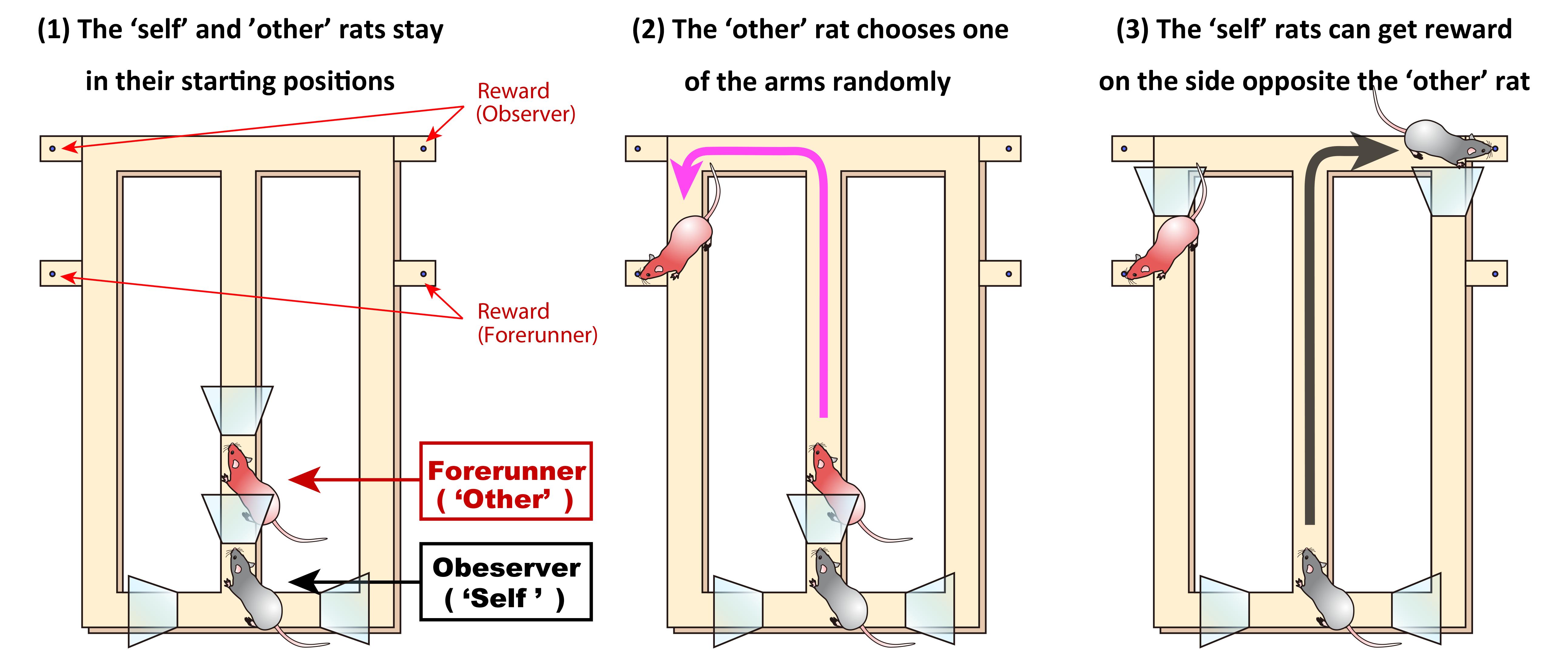 maze task schematic