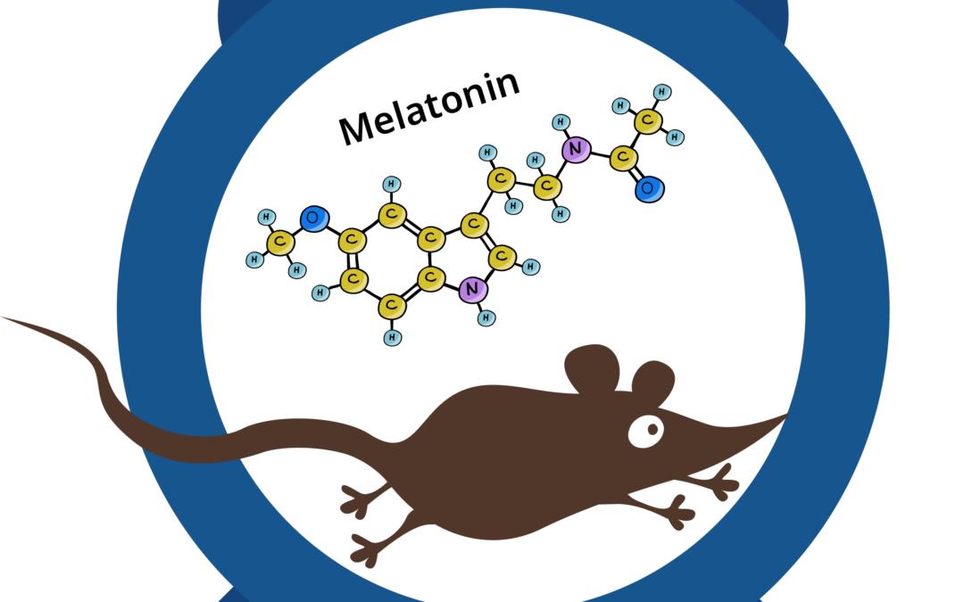 Melatonin in mice, circadian rhythms, and daily torpor