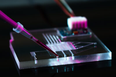 Brain tissue kept alive for weeks with new microfluidic device