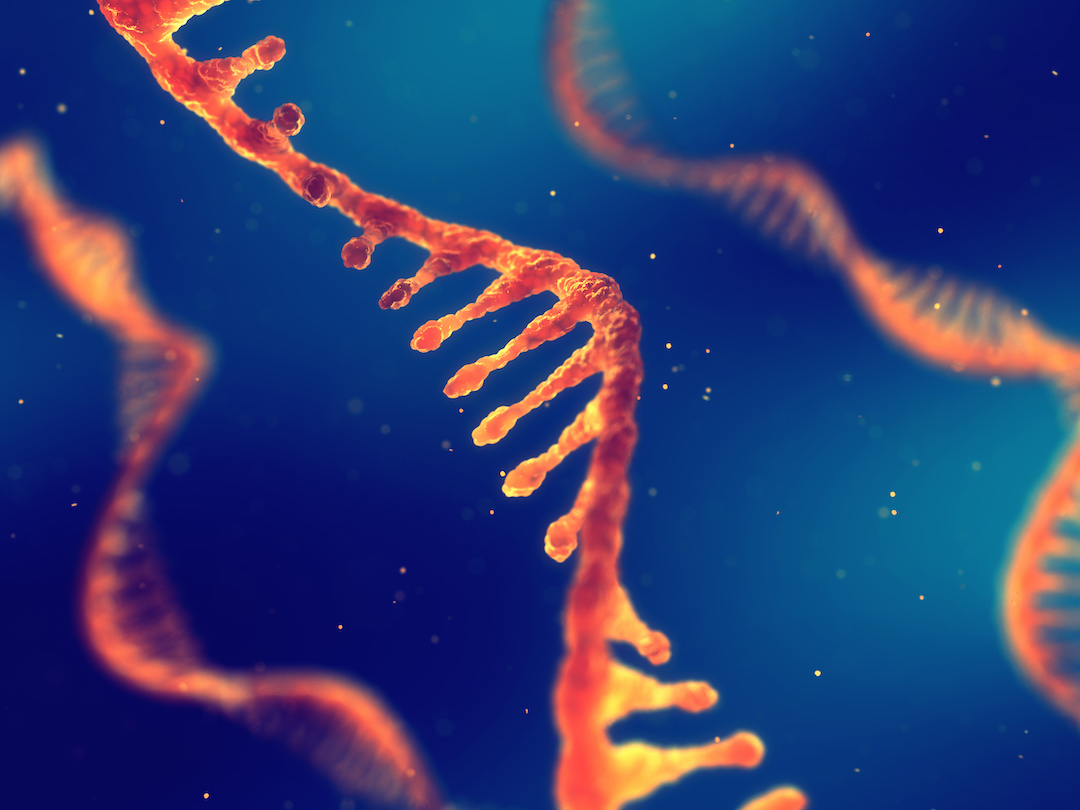 artist's rendition of RNA