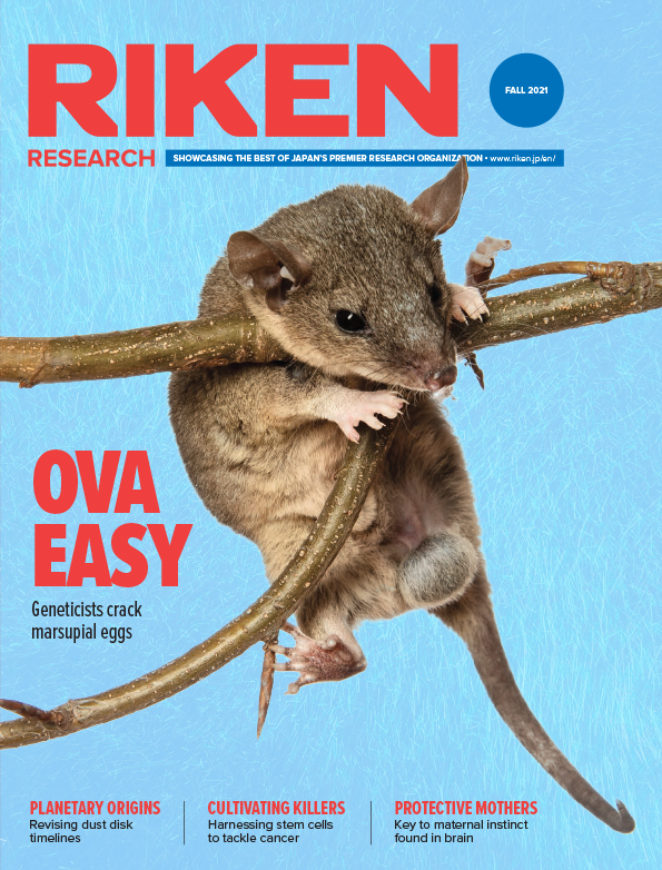 download the Fall 2021 issue of RIKEN Research