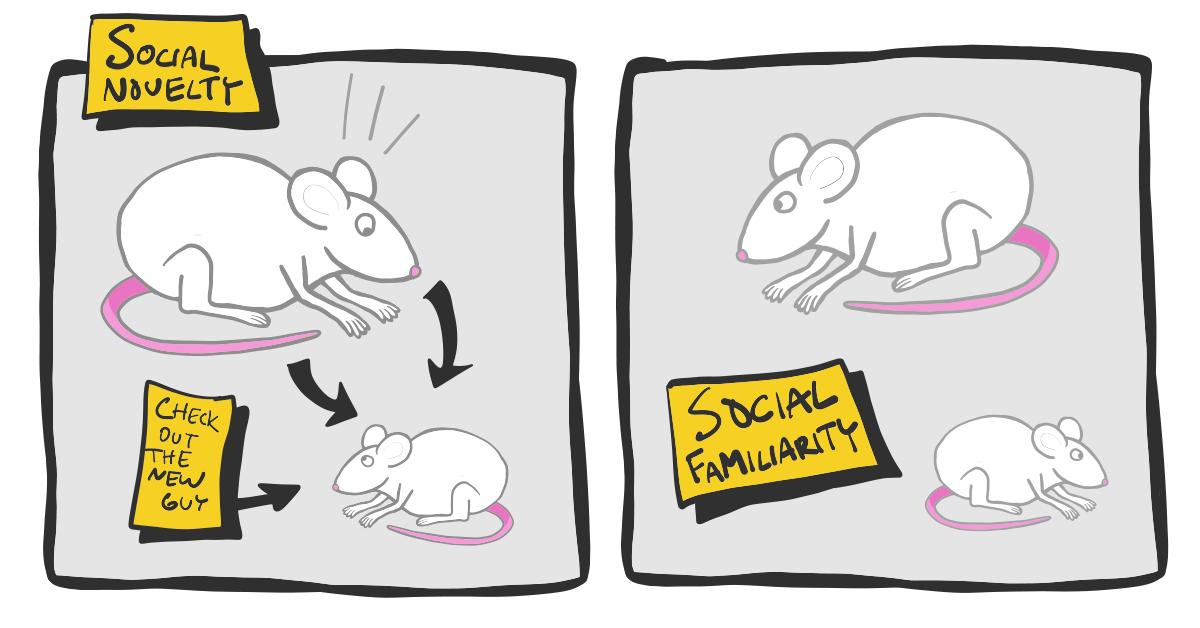 social novelty test