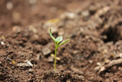 Plant peptide spells relief from salty stress