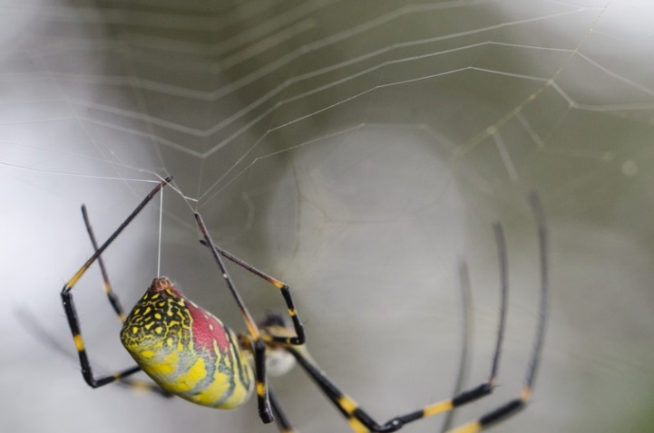 Quick, call Spiderman: scientists discover how spider silk is formed
