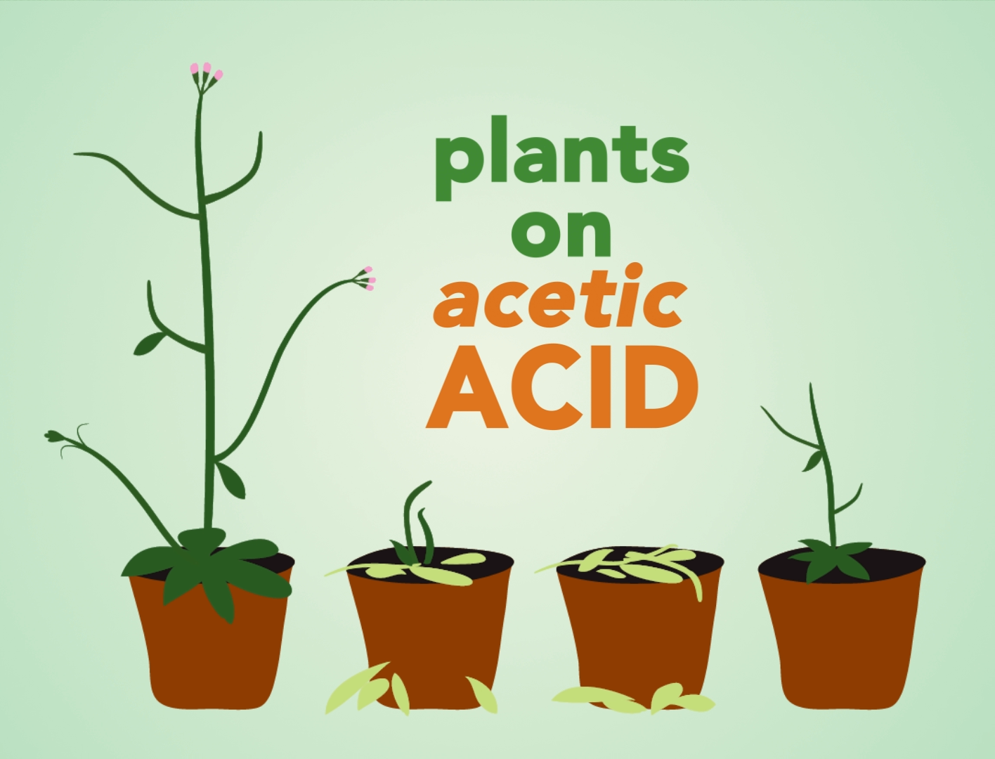 plants on acid cartoon