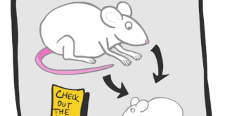 social novelty test in mice